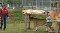 Tiger King: Murder, Mayhem and Madness Tráiler VO