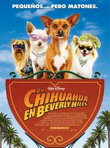 Un chihuahua en Beverly Hills
