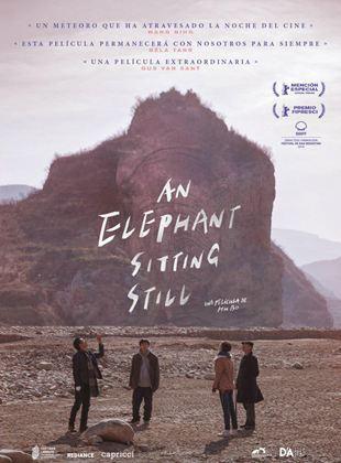 An Elephant Sitting Still