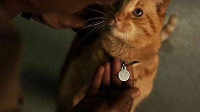 ¿Confirmados los poderes de Goose, el gato de 'Capitana Marvel'?