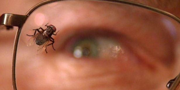 ENCUESTA: ¿Te gustó el episodio de 'La Mosca' de 'Breaking Bad'?