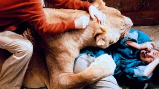 'Roar': Durante el rodaje de esta película ningún animal sufrió daños, pero ¿y los humanos?