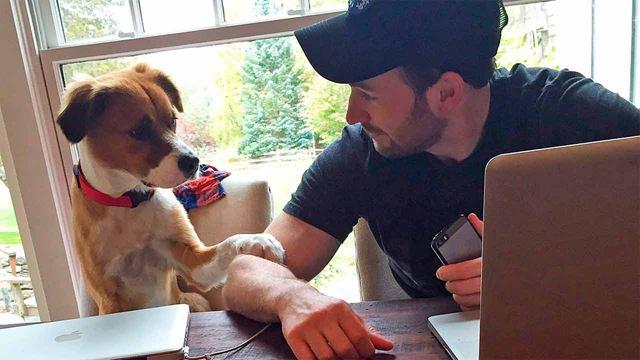 Chris Evans comparte el momento en que conoció a su perro y derrite internet