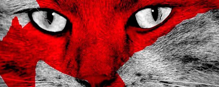 Los juegos del hambre: Sinsajo - Parte 2': Buttercup, el gato de ...