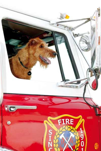 Perro al rescate : Foto Todd Holland