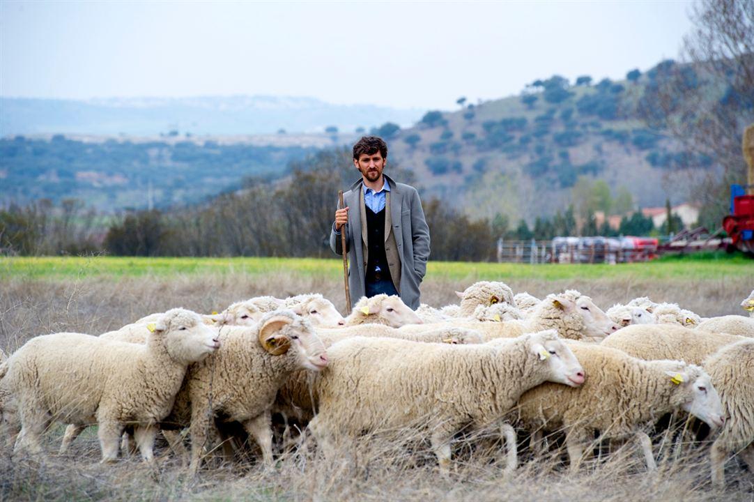 Las ovejas no pierden el tren : Foto Raúl Arévalo