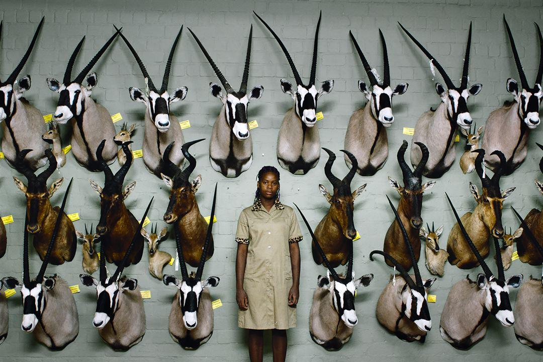 Safari : Foto