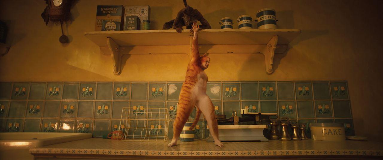 Cats : Foto