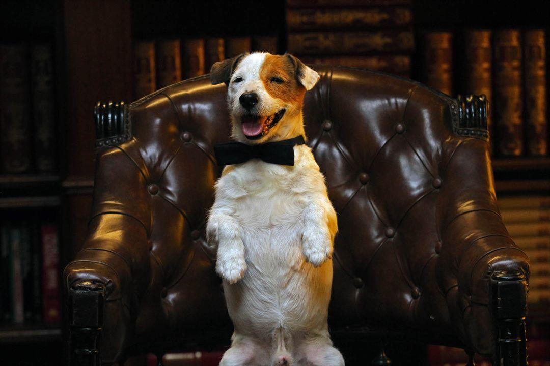 Pancho, el perro millonario : Foto