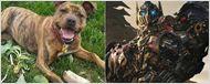 """'Transformers: The Last Knight': Michael Bay ficha al """"perro más solitario de Gran Bretaña"""" para la película"""
