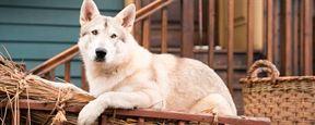 'Outlander' celebra el Año del Perro con una imagen de Rollo