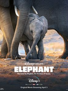 Los Elefantes Tráiler VO