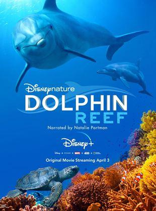 Delfines: La vida en el arrecife