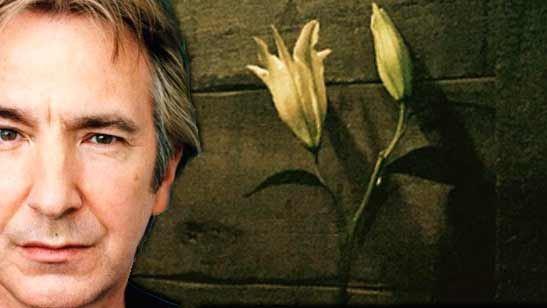 El lirio en la clase de pociones y otros homenajes a Alan Rickman