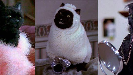 'Sabrina, cosas de brujas': 20 imágenes de Salem que le convierten en la mascota perfecta