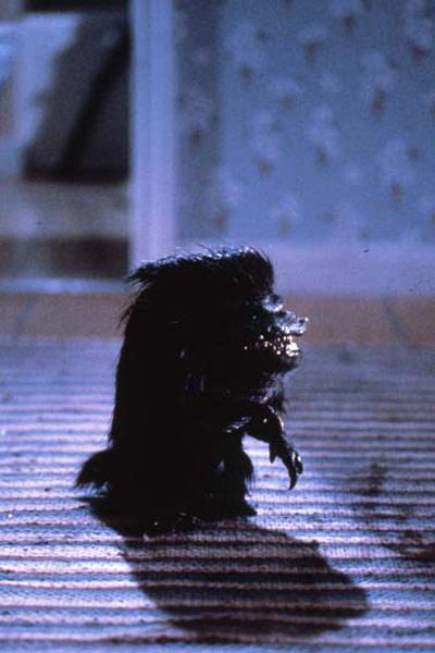 Critters: Stephen Herek