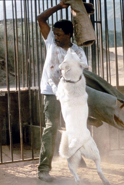 Perro blanco : Foto Paul Winfield